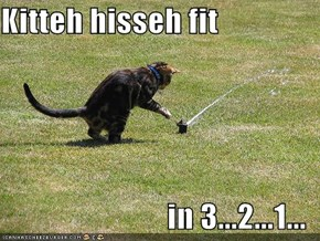 Kitteh hisseh fit   in 3...2...1...