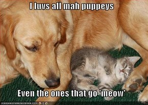 I luvs all mah puppeys  Even the ones that go 'meow'