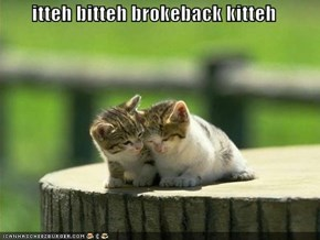 itteh bitteh brokeback kitteh