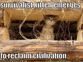 survivalist kitteh emerges  to reclaim civilization