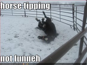 horse tipping  not funneh