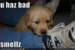 u haz bad   smellz