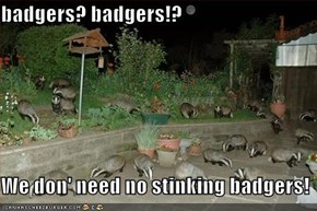 badgers? badgers!?  We don' need no stinking badgers!