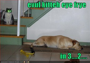 evul kitteh eye frye  in 3....2....