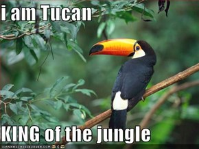 i am Tucan  KING of the jungle