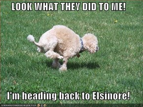 LOOK WHAT THEY DID TO ME!  I'm heading back to Elsinore!