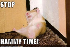 STOP  HAMMY TIME!