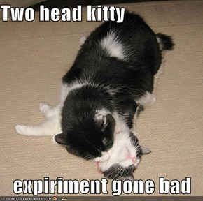 Two head kitty  expiriment gone bad
