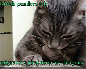 kitteh ponders teh   migratory practisses uv dragons