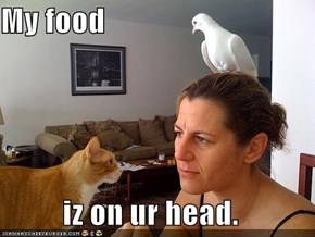 My food  iz on ur head.
