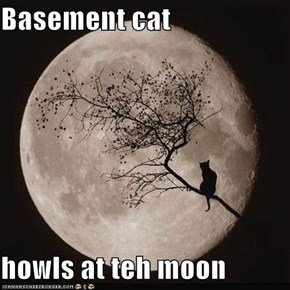 Basement cat  howls at teh moon