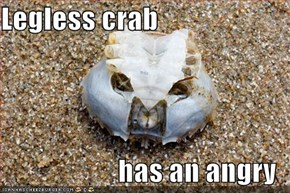 Legless crab  has an angry