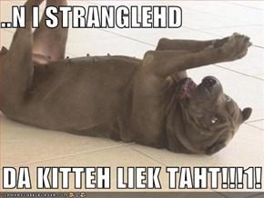 ..N I STRANGLEHD     DA KITTEH LIEK TAHT!!!1!