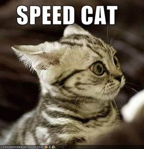 SPEED CAT