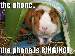 the phone..  the phone is RINGING!