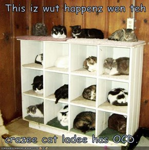 This iz wut happenz wen teh   crazee cat ladee has OCD.