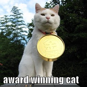 award winning cat