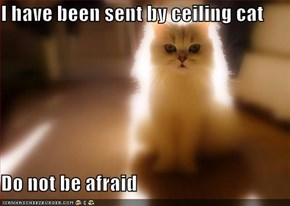 I have been sent by ceiling cat  Do not be afraid