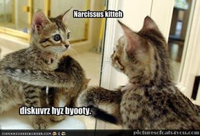 Narcissus kitteh