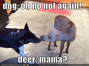 dog: oh no not again!  deer: mama?
