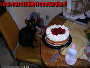 i can haz straberi cheezcake ?