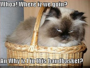Whoa! Where iz we goin?  An Why iz I in this handbasket?