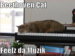 Beethoven Cat  Feelz da Muzik