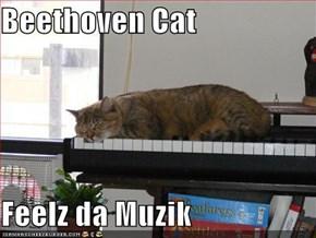 Beethoven Cat  Feelz da Muzik