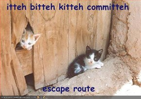 itteh bitteh kitteh committeh  escape route