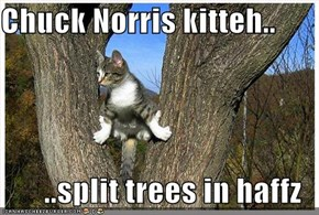 Chuck Norris kitteh..  ..split trees in haffz