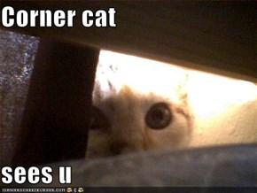 Corner cat  sees u