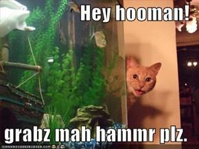 Hey hooman!  grabz mah hammr plz.