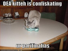 DEA kitteh is confiskating  ur parifinalias
