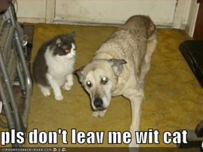 pls don't leav me wit cat