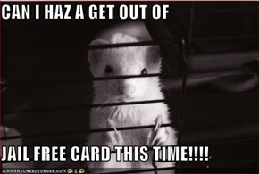 CAN I HAZ A GET OUT OF   JAIL FREE CARD THIS TIME!!!!