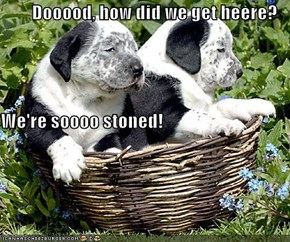 Dooood, how did we get heere?  We're soooo stoned!