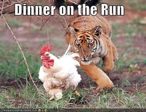 Dinner on the Run