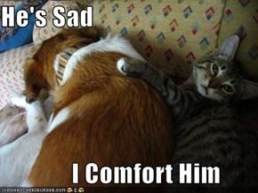 He's Sad                I Comfort Him