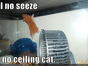 I no seeze   no ceiling cat.