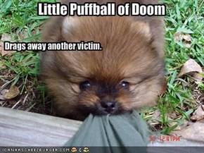 Little Puffball of Doom