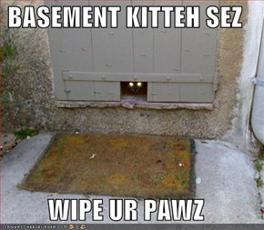 BASEMENT KITTEH SEZ  WIPE UR PAWZ