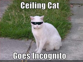 Ceiling Cat   Goes Incognito