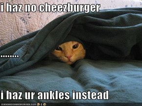 i haz no cheezburger ........ i haz ur ankles instead