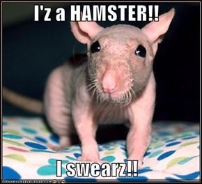 I'z a HAMSTER!!  I swearz!!