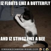 IZ FLOATS LIKE A BUTTERFLY  AND IZ STINGZ LIKE A BEE