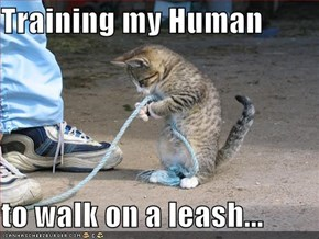 Training my Human   to walk on a leash...