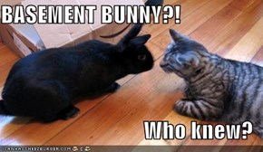 BASEMENT BUNNY?!  Who knew?