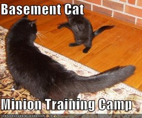 Basement Cat  Minion Training Camp