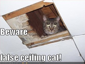 Beware false ceiling cat!