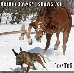 Herdin dawg?  I shows you  herdin!